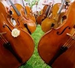 45-violoncello